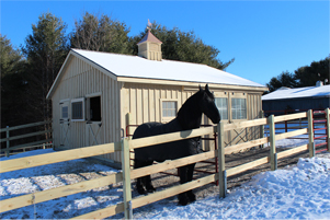 Pine hoorse barn in Winter